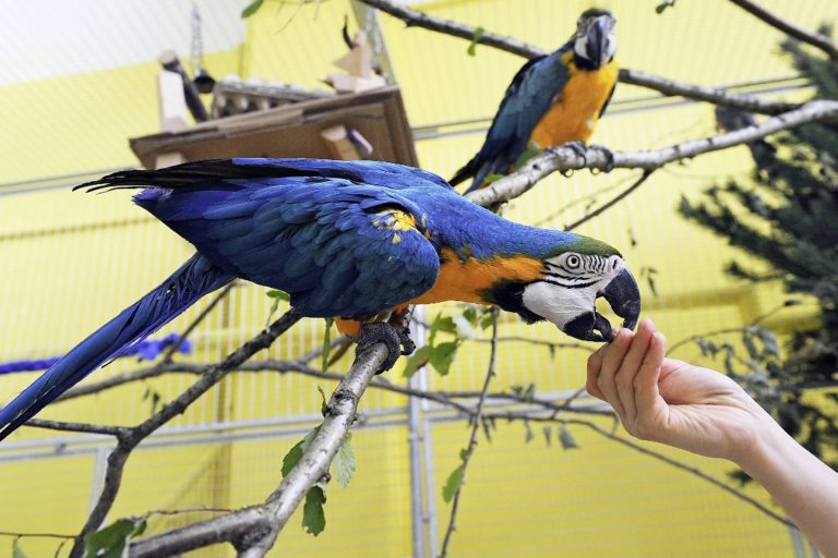 Partnervermittlung für vögel